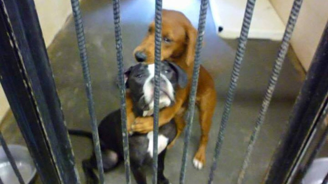 Kara giving Keira a reassuring embrace while awaiting to be put down. Kara giving Keira a reassuring embrace while awaiting to be put down. (Source:Angels Among Us Pet Rescue/Malena Evans.)